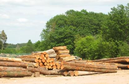 La filière bois lit son avenir au salon Euroforest