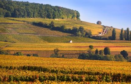 Vin : production et consommation mondiales en baisse
