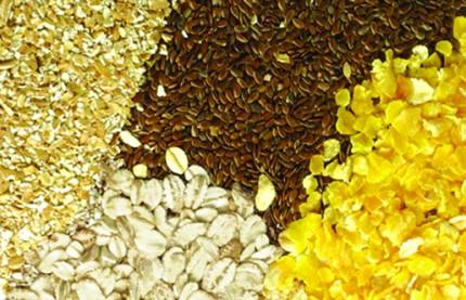 Eurogerm engrange son blé d'hiver