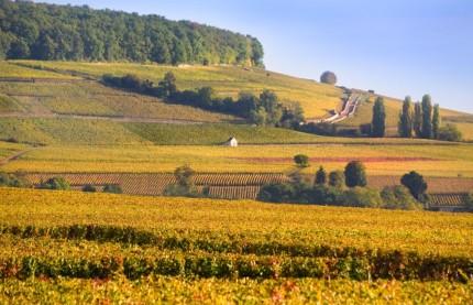 Américains et asiatiques aiment le vin de Bourgogne
