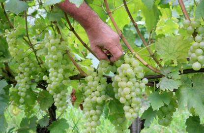 Le vin de Bourgogne nage entre deux eaux