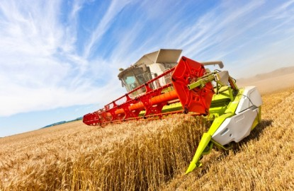 Dijon Céréales sauve son année avec moins de blé