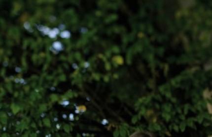 Pourquoi Drouhin rachète 112 hectares de vignes aux Etats-Unis