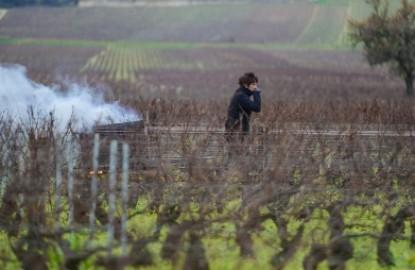 Viticulture : l'affaire Giboulot