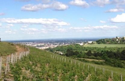 Dijon veut inscrire son nom comme appellation viticole en renouant avec son passé bacchique