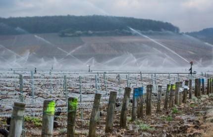 Le vignoble bourguignon risque de perdre un tiers de sa récolte en raison du gel