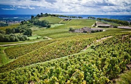 Les négociants en vins de Bourgogne misent sur une nette relance des vins du Beaujolais
