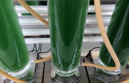 Algae Natural Food, spécialiste des micro-algues accroît sa production à Strasbourg à partir de 2017