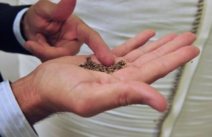 La société de biotechnologie lorraine Biolie extrait les principes actifs des végétaux