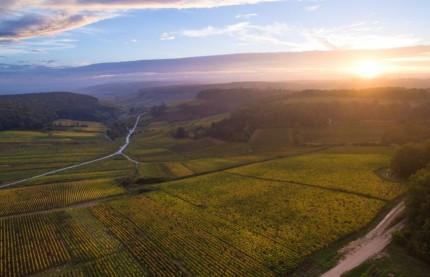 Après la vente des Hospices de Beaune, les trois raisons du succès du vin de Bourgogne et de l'inquiétude des professionnels