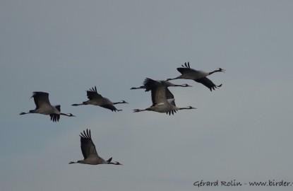 Profession guide ornithologue : sur la route des migrations des oiseaux au lac du Der en Haute-Marne