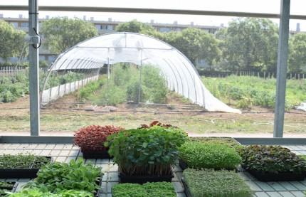 Le mouvement de l'agriculture urbaine gagne du terrain à Dijon et en Côte-d'Or