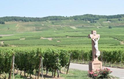 L'Alsace se dote d'une grande école spécialisée dans les métiers du vin