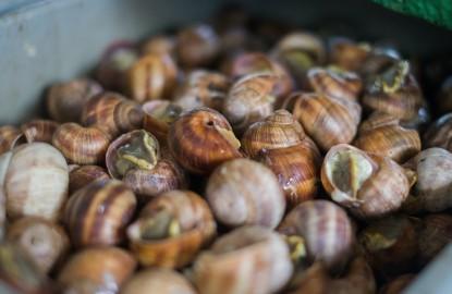 Murielle Grégoire et Yannick Gérome sortent la conserverie d'escargots Jacot Billey de sa coquille