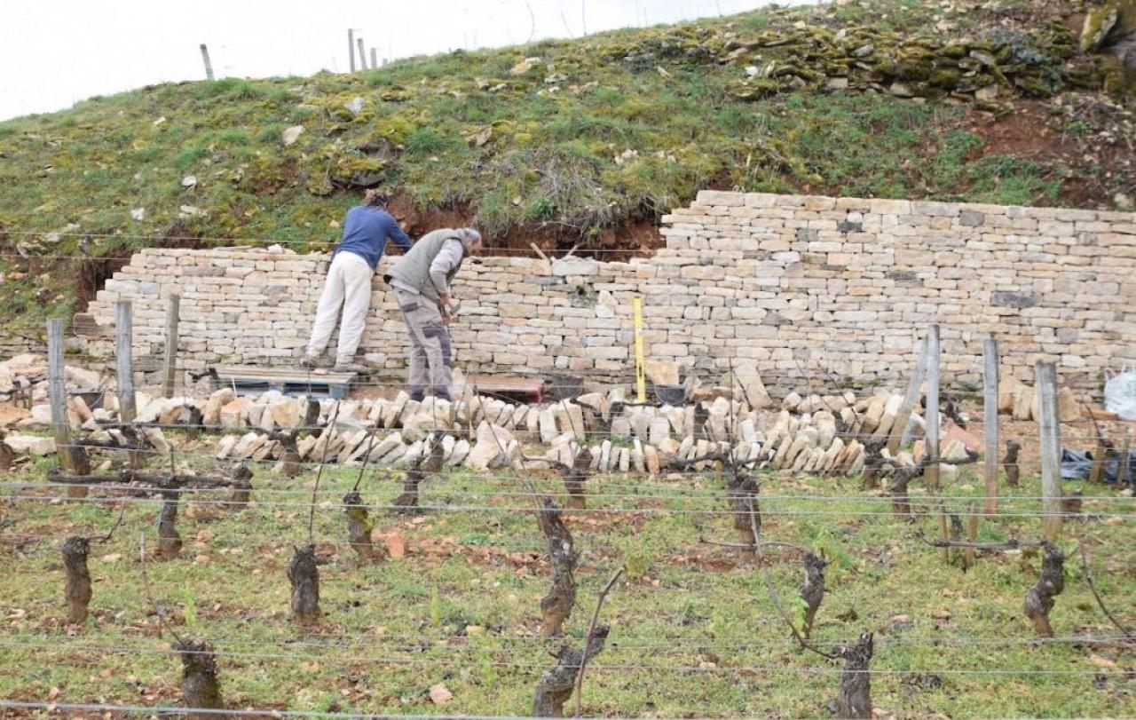 «Pour reconstruire un mur de pierre sèche, il ne suffit pas d'empiler des pierres les unes sur les autres ; pour qu'un ouvrage soit solide, il faut d'abord faire quelques calculs », explique Bruno Schneider, murailler en Côte-d'Or. © Traces Écrites.
