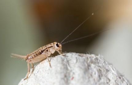 Alim'Ento lance une gamme protéinée aux insectes pour les sportifs