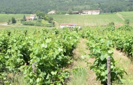 L'inexorable montée en gamme des vins d'appellation mâcon-villages