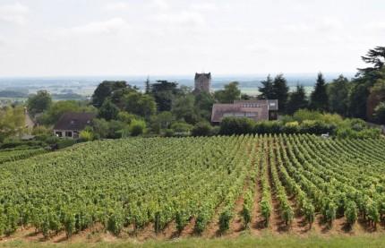 Des perturbations géopolitiques pour le vin de Bourgogne dont la récolte 2019 montre des rendements hétérogènes