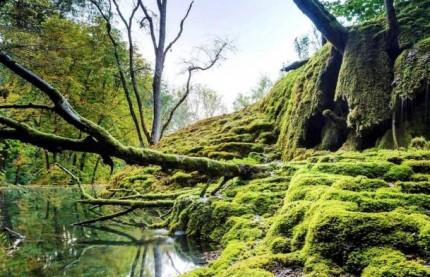 Côte-d'Or et Haute-Marne : les retombées économiques attendues du Parc national de Forêts, à la veille de son acte de naissance ce jeudi 7 novembre