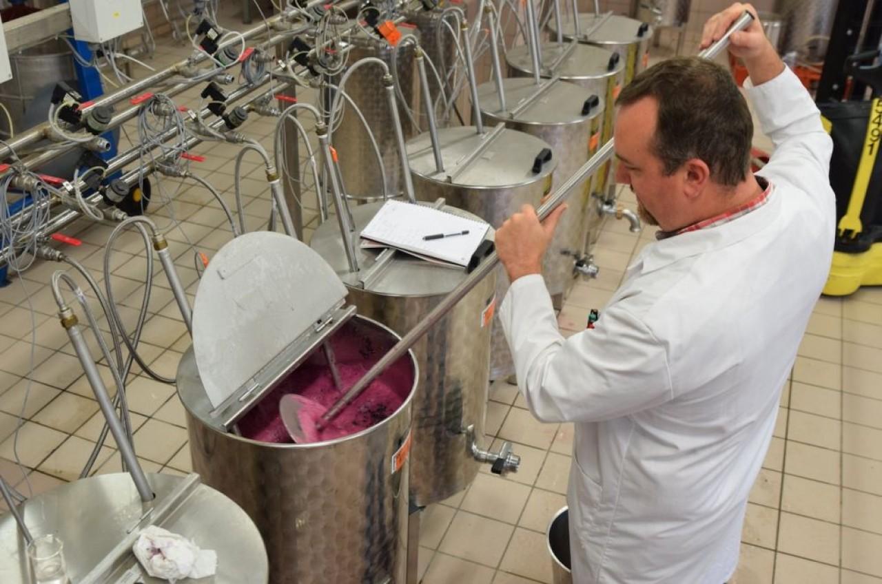 Pigeage manuel sur une cuve de vinification en cours d'expérimentation. © Traces Ecrites