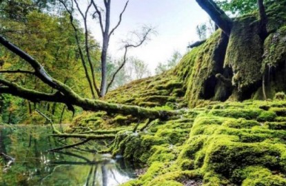 Retour sur 2019 : naissance du Parc national de Forêts