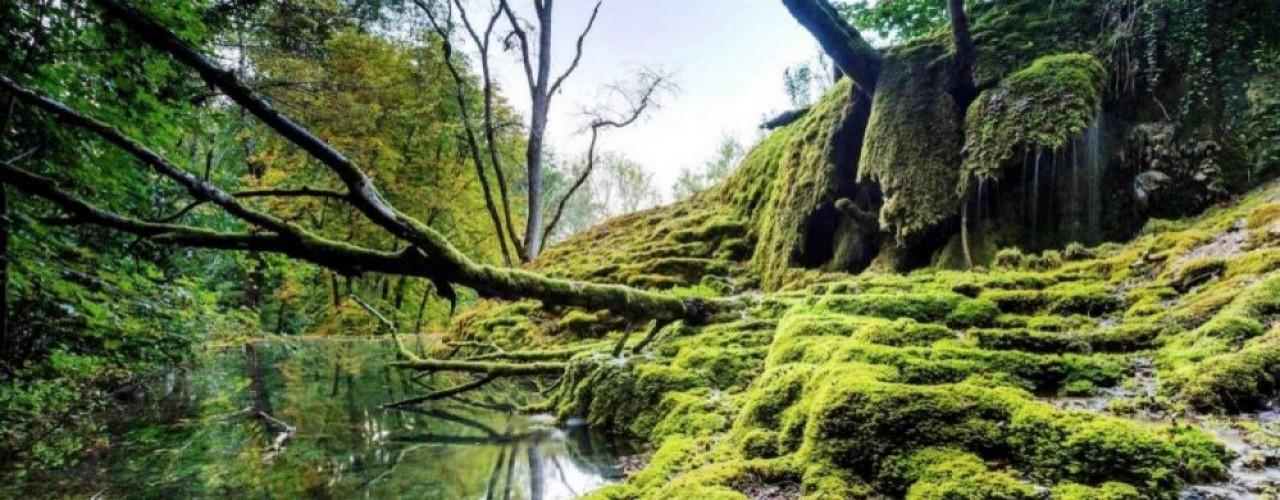 La tufière de Rolampont (Haute-Marne) est sans doute la plus spectaculaire des formations de tuf – une roche calcaire poreuse et légère – présentes dans le Parc national de Forêts. Le site est aménagé pour les visites. © Franck Fouquet