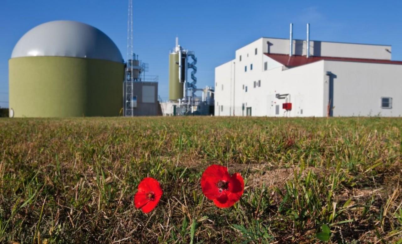Entre entre fin août et début février, la station d'épuration de Meistratzheim, près d'Obernai, transforme des jus de choucroute en biogaz, servant au fonctionnement d'une cogénération. ©Suez