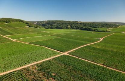 L'avenir des vins de Bourgogne se situe t-il dans le bio ?