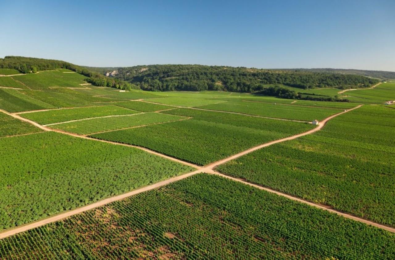 Le vignoble en Côte-d'Or est celui, en Bourgogne, qui a la plus forte proportion de culture en bio, environ 20%. Ici paysage de Flagey-Echezeaux. © BIVB / Aurélien Ibanez