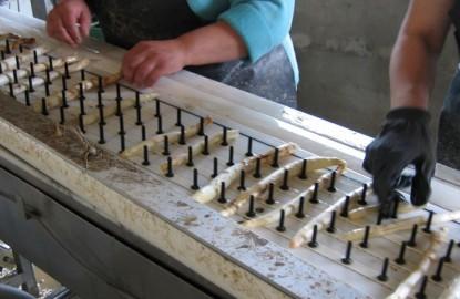 En Alsace, les producteurs d'asperges font face au manque de débouchés et à la baisse des prix