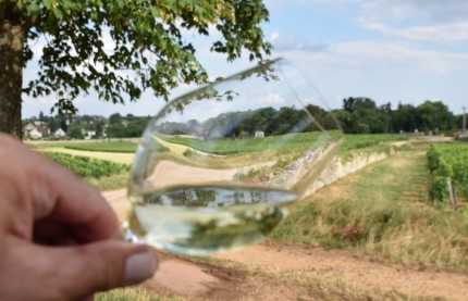 Crise sanitaire : la Bourgogne viticole s'en sort plutôt mieux que les autres vignobles