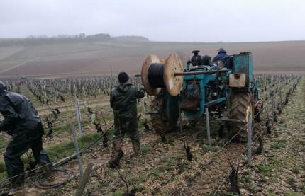 Yonne : Prysmian Group à Sens propose un câble chauffant qui protège la vigne du gel de printemps