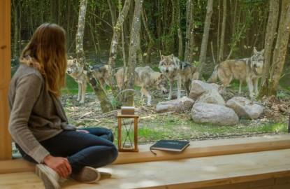 En Moselle, le Parc animalier de Sainte-Croix donne l'occasion d'observer une centaine d'espèces en semi-liberté