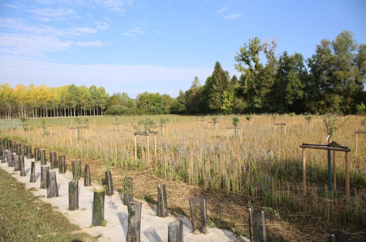 Exemple de ce que peut faire l'agroforesterie : ici, une prairie fleurie associée à un verger de 55 fruitiers à variétés parfois anciennes. © Valéry Choplain