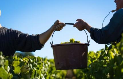 Ce quart de siècle qui a changé le vignoble de Bourgogne