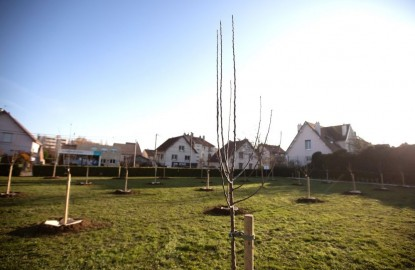 La photo de la semaine : à Dijon, un banc, un arbre et une rue