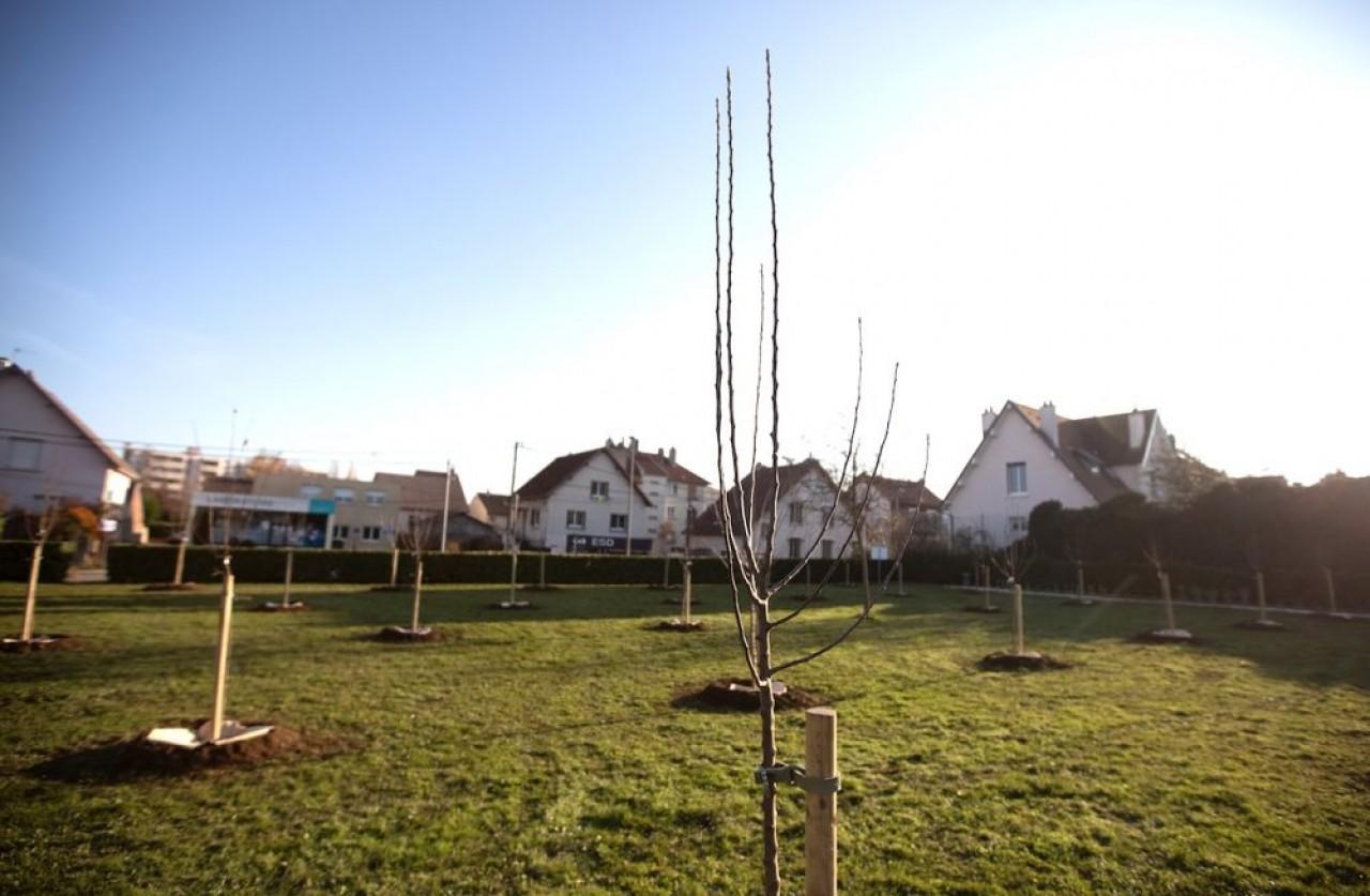 Le premier verger dijonnais urbain toute juste planté. © Ville de Dijon/ V.Arbelet