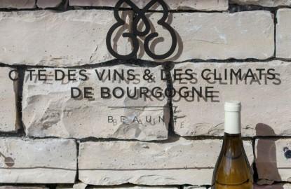Partagées entre Beaune, Mâcon et Chablis, les Cités des Vins et des Climats de Bourgogne ouvriront au public l'an prochain