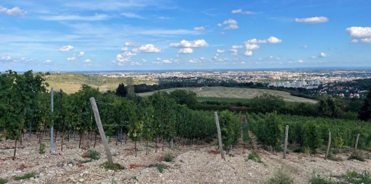 Parcelle viticole sur le plateau de La Cras dont Dijon Métropole possède près de 200 hectares qu'elle souhaite voir préservés au profit d'une polyculture périurbaine. © Domaine du Tumulus