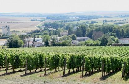 Vignoble méconnu : le Montsaugeonnais, en Haute-Marne, doit beaucoup à Charles Guené et à l'ancien premier ministre Michel Rocard