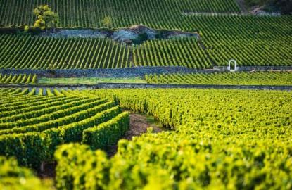 Version négoce, le vin de Bourgogne offre une étonnante résilience à la crise sanitaire