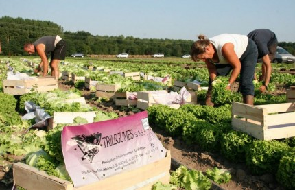 Face au dérèglement climatique, la coopérative Dijon Céréales poursuit sa mue