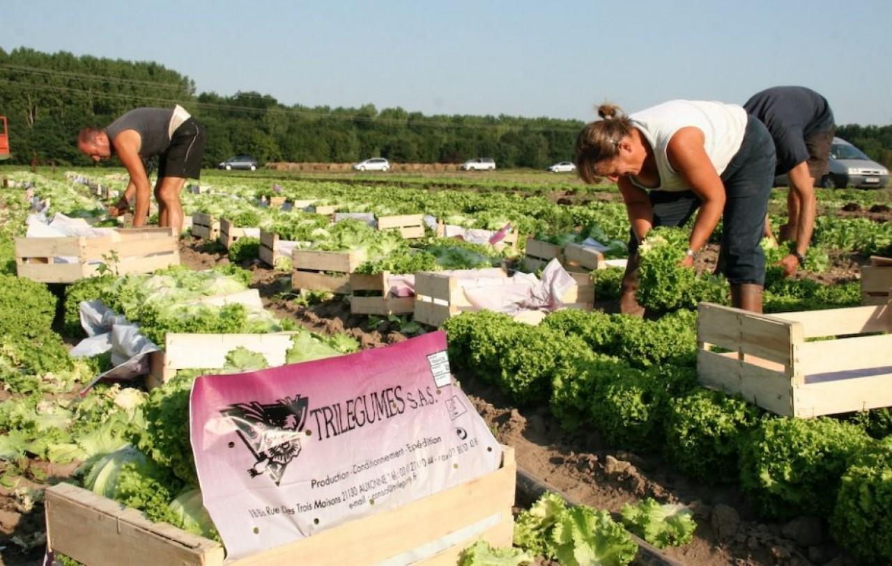 Dijon Céréales saisit l'opportunité de l'engouement des consommateurs pour les produits maraîchers de proximité. © Dijon Céréales