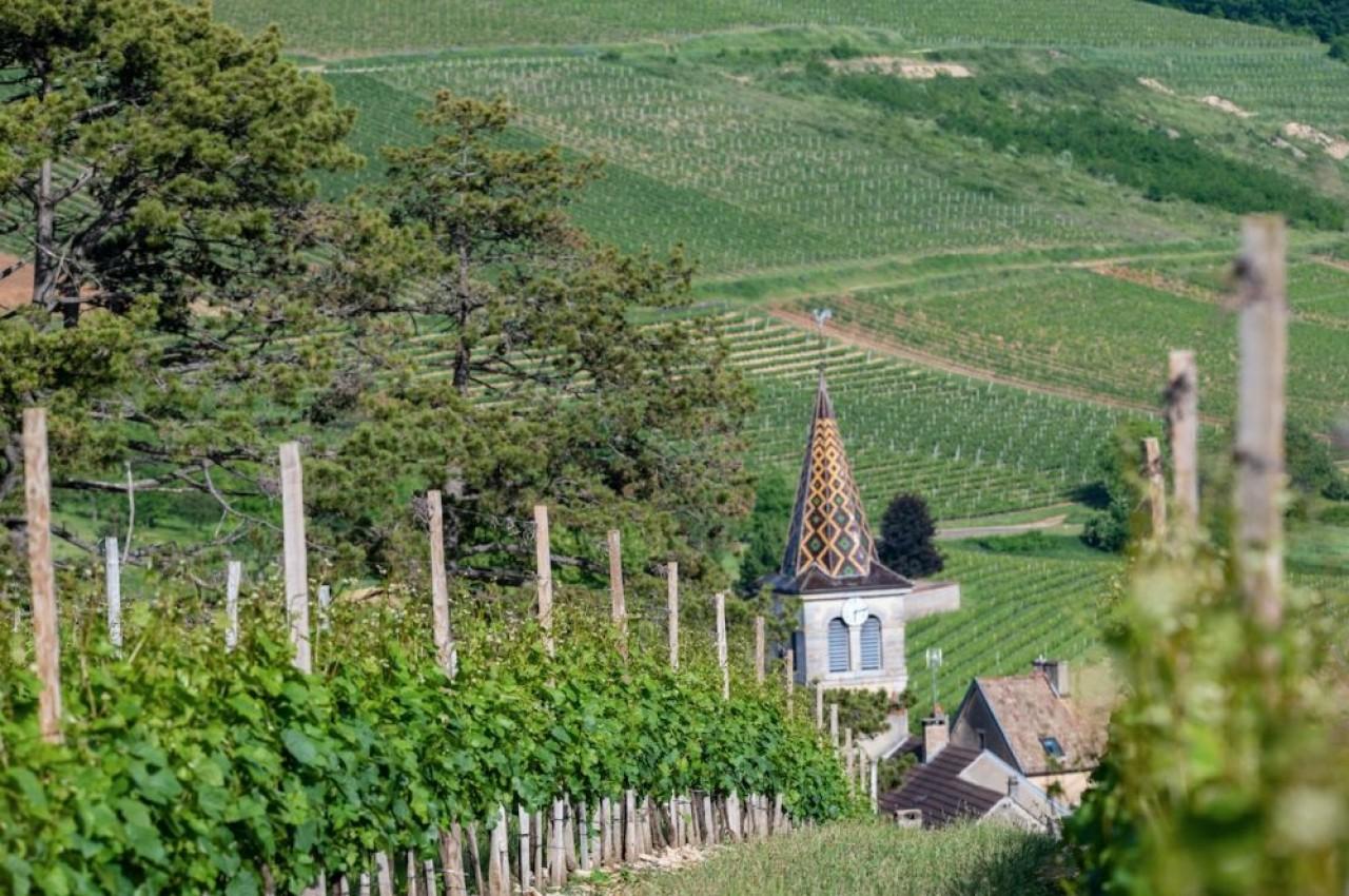 Paysage viticole des Hautes Côtes de Nuits à Chevannes. © BIVB / Michel Joly