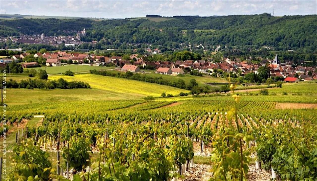 Le vignoble du Tonnerrois s'étend de part et d'autre de la rivière Armançon, au sud-est de l'Yonne, entre deux productions renommées, le Chablis et le Champagne. ©Yonne Tourisme/Studio Morize