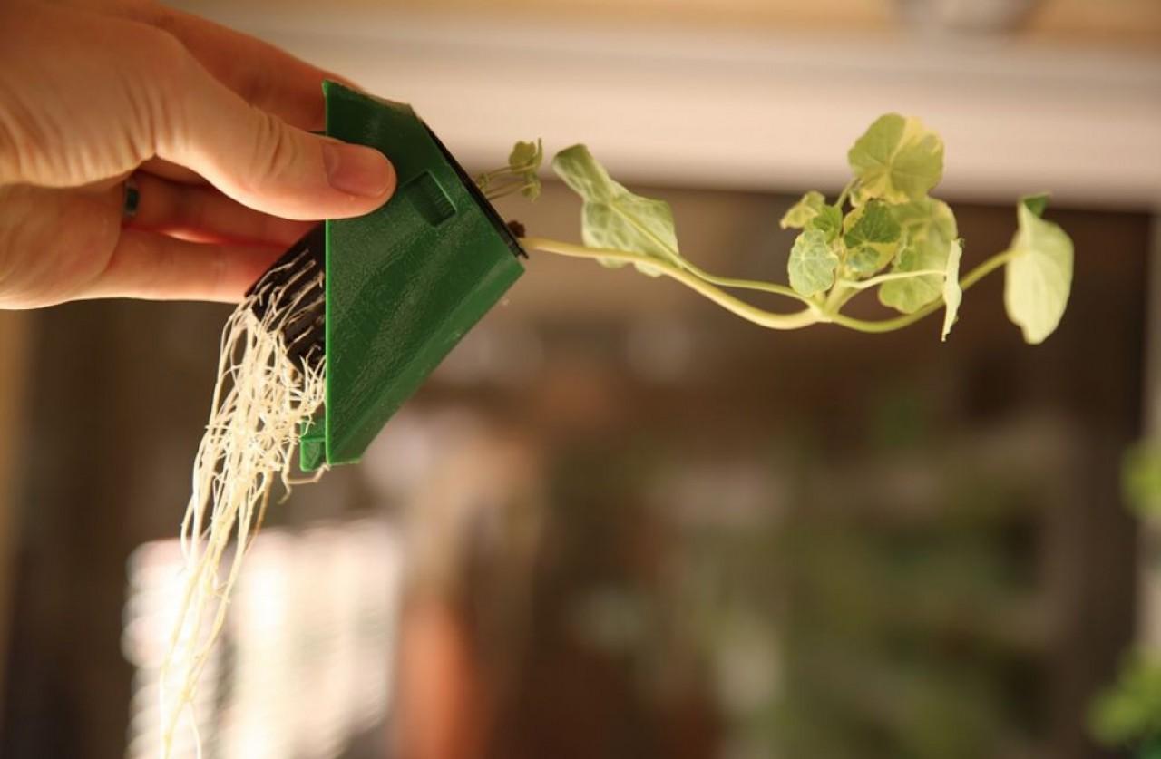 Farm3 utilise la technologie de l'aéroponie, une culture économe en eau, réalisable n'importe où : les racines des plantes sont maintenues à l'air libre et arrosées par un fin brouillard. © Farm3