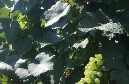 Vins de Bourgogne : un tout petit millésime 2021 mais des ventes en hausse