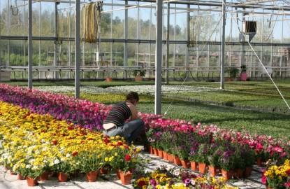 En marge du salon Florissimo, la filière horticole se cherche un terreau plus fertile