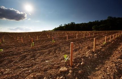 Le vin de Bourgogne peut-il rester fidèle à l'AOC ?