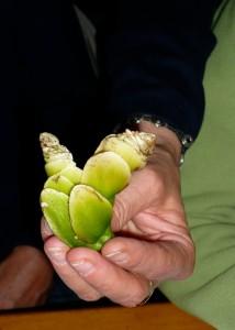 Un curieux légume très consommé en Afrique du Sud.